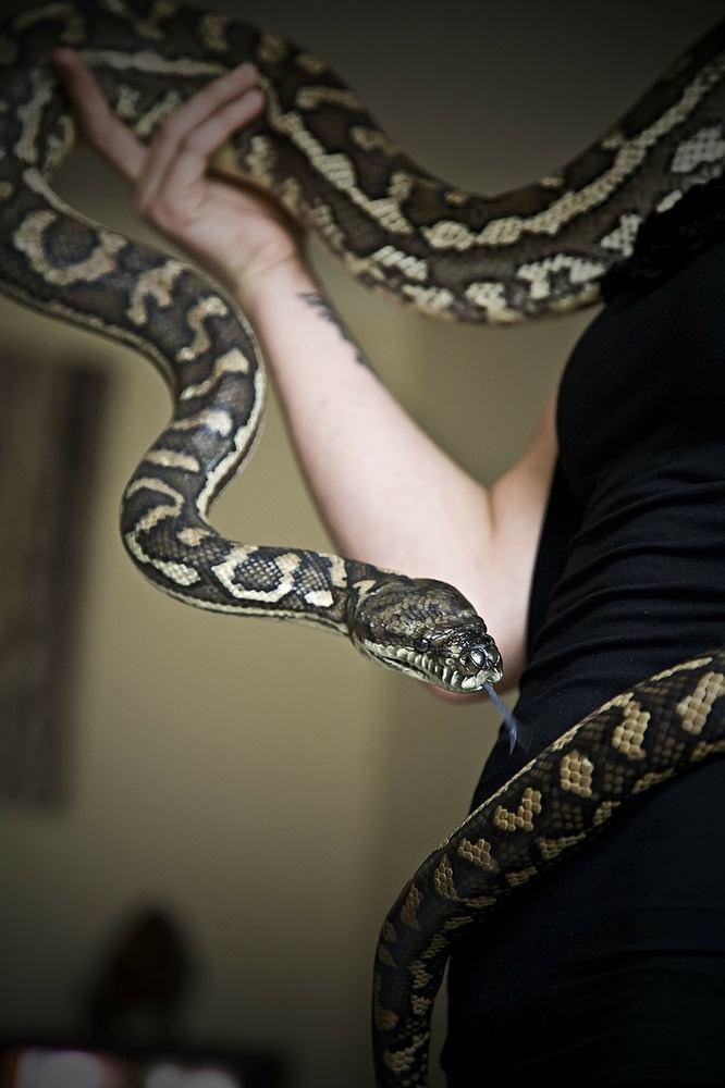 Reptiler som husdjur