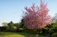 Sommar i din vackra trädgård